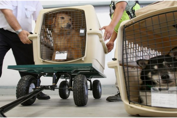 How Much Do Pet Transporters Make?